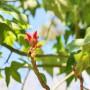 TreeBlossom_sm
