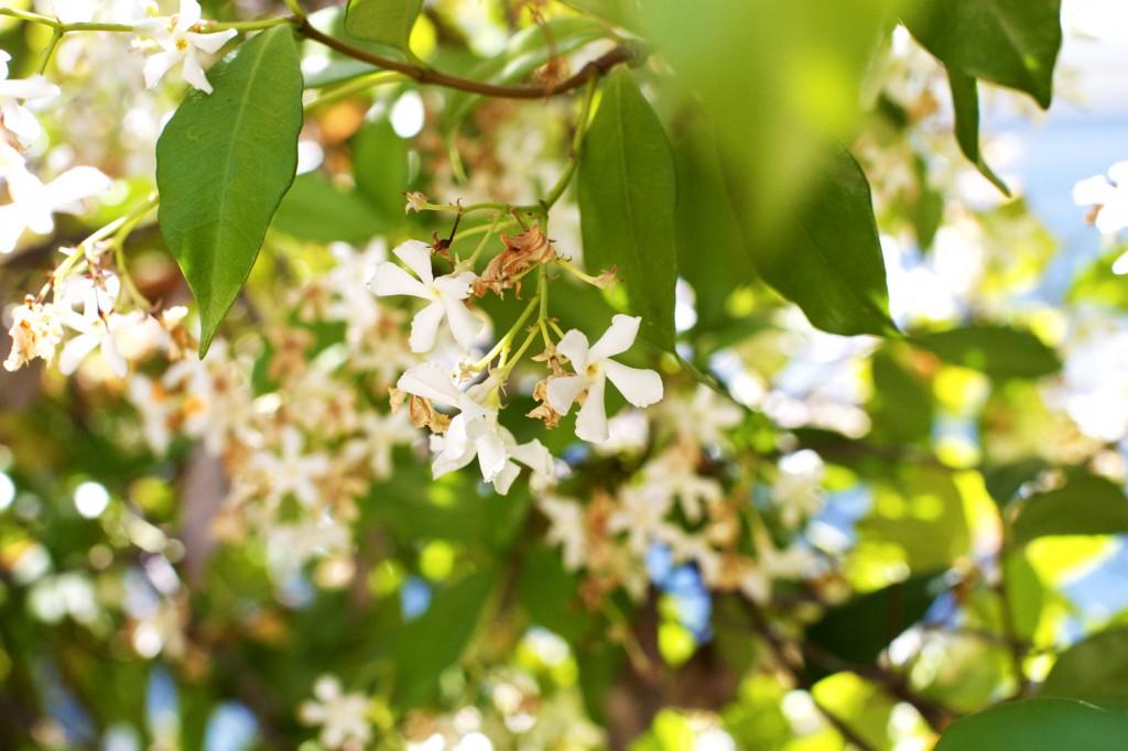 sm_flowers