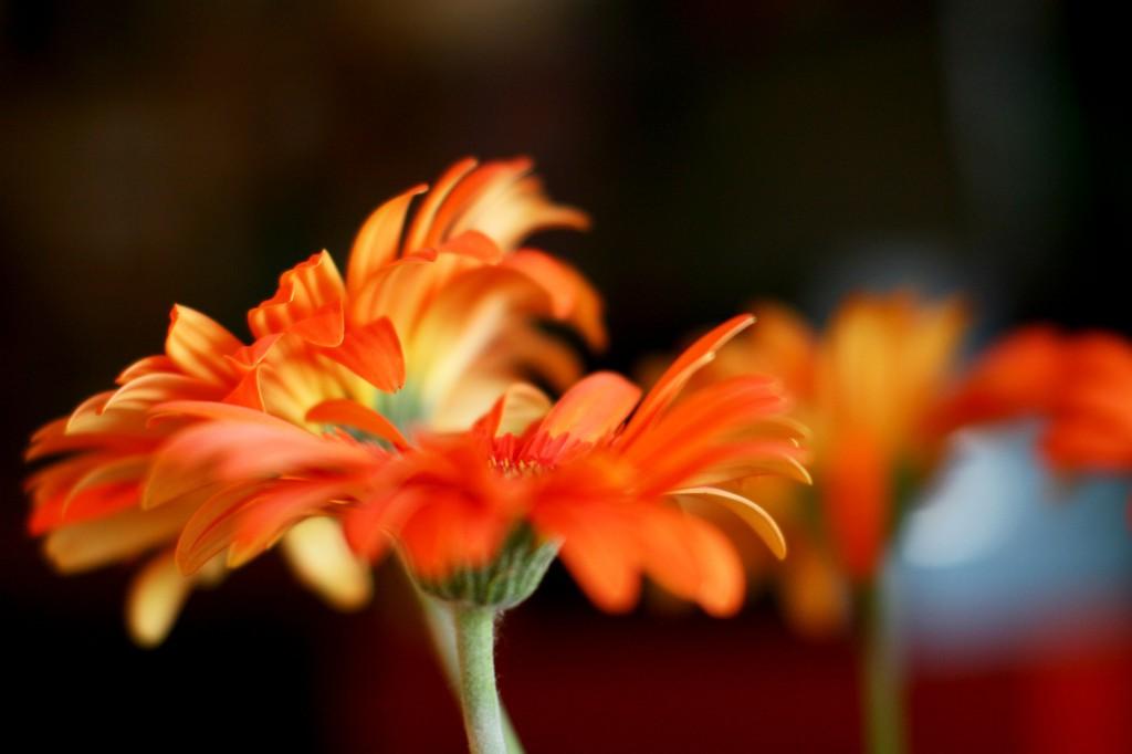 Orangebang2