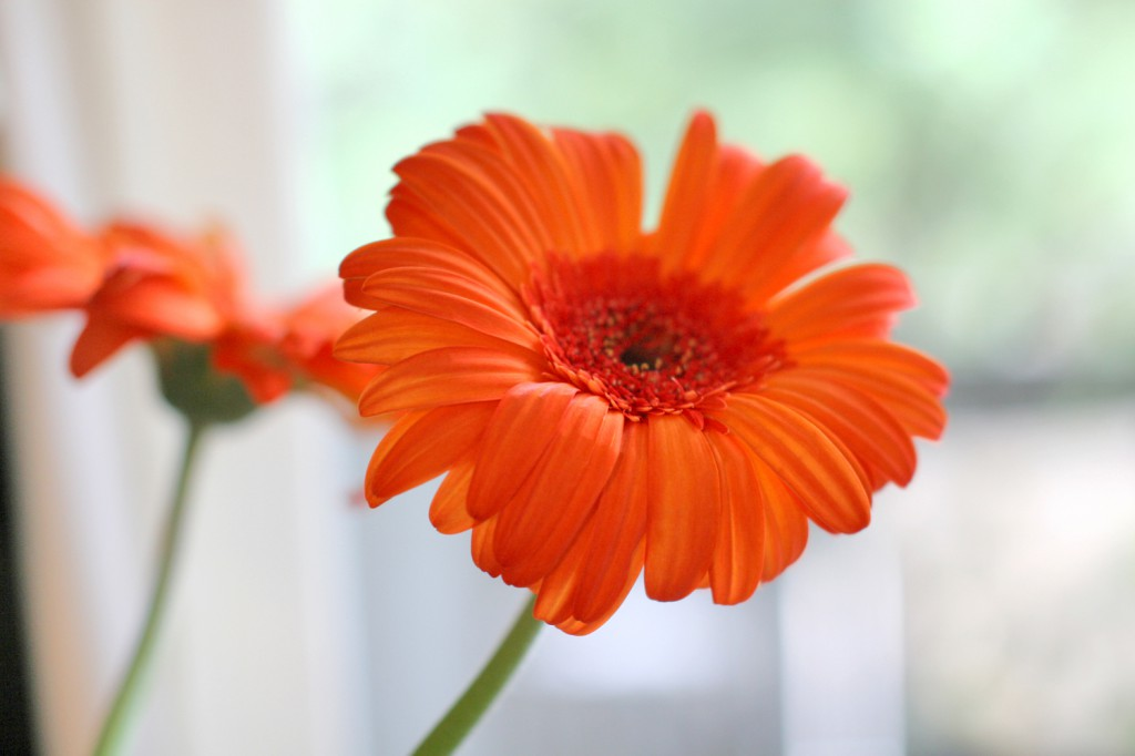 sm_Orangebang1