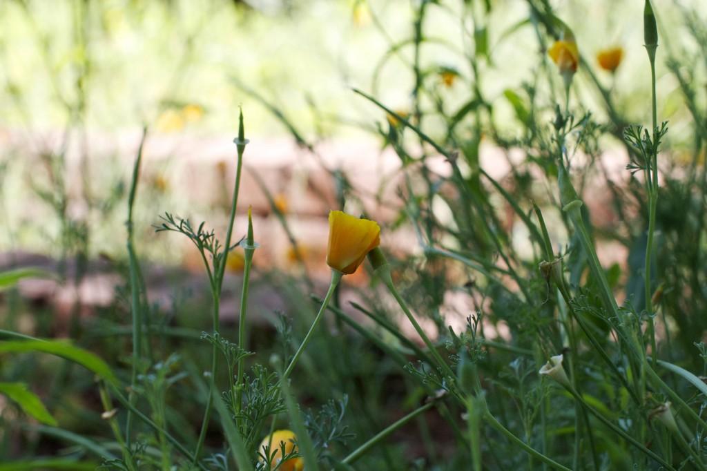 sm_Flower